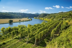 The Bohemia Wine Region