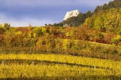 Mikulovská Wine Sub-region