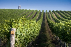 Znojemská Wine Sub-region
